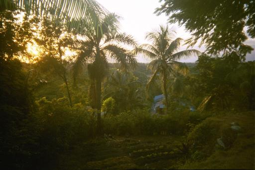 random scenery in Haiti